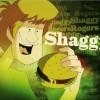 mi_shaggy